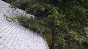 6 Summer Roof Cleaning Tips To Save Money Roof cleaning and maintenance can be expensive, dangerous, time-consuming, and draining. As difficult as it sometimes can be, it is essential to maintaining a healthy, safe, and happy home. As your trusted Platte County roofing company, we want to help guide you toward a direction of safety and comfort, both for you and your home maintenance finances. Here are six tips you can do today that will help save you money and maintain a safe and healthy roof. Tip #1: Dealing with Tree Limbs Routinely make sure that the trees surrounding your house are not in contact with your roof. If they are, they can be easily cut and trimmed accordingly, to regain a safe perimeter around your roof's surface. Trees rubbing and dropping debris will significantly decrease the lifespan of your roof, and put you at higher risk of a falling tree catastrophe. Tip #2: Leaves and Pine Needles Small amounts of leaves and pine needles are fine, but large numbers can hold large amounts of moisture, which could damage your roof. This could potentially cause flooding and leaks if this issue is not taken care of promptly. Anything trapped with moisture will cause mildew to form, blocking the gutters, drains, and ventilation systems built into your roof by your Platte County roofing company. Tip #3: Moss As your premium Platte County roofing contractor, warning you about the dangers moss can do to your roof should be a top priority. Moss can damage your roof through the collection of water; stain your roof, and even affect the efficiency of your gutters and drains. Clean your roof yourself if you can maintain safety, or contact your local residential roofing contractor in Platte County to help remove moss from your roof. Tip #4: Mold If you notice dark colored streaks and stains on your roof, your roof could be suffering from mold, algae, or even fungus. These can eat away at your roofing material, and even cause leaks if left alone long enough. A treatment of