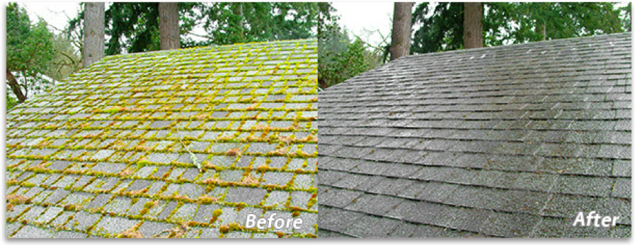 Cleaning Moss & Algae Off Your Roof in Platte County1
