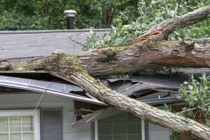 Shamrock A - Trees 4 Ways Roofing Can Roof Damage