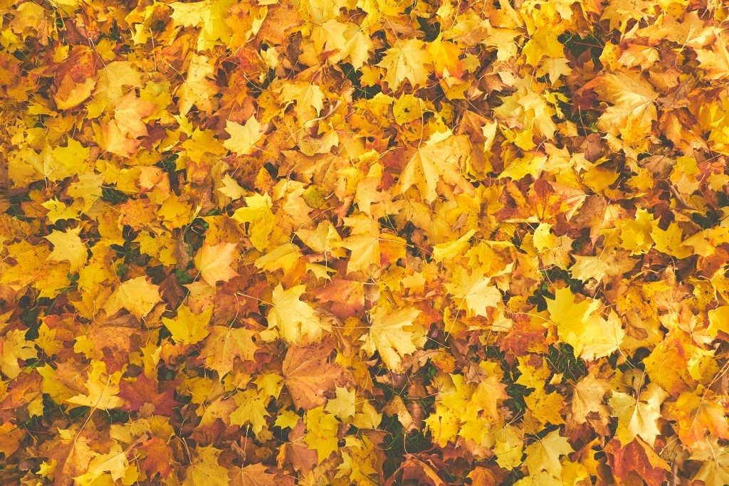 Why Fall is the Best Time for Roofing in KC