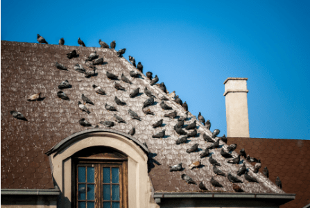 Keep Birds from Nesting on the Roof with These 5 Tips